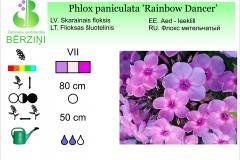 Phlox paniculata Rainbow Dancer