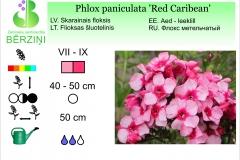 Phlox paniculata Red Caribean