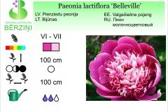 Paeonia lactiflora Belleville