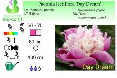 Paeonia lactiflora Day Dream