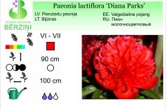 Paeonia lactiflora Diana Parks