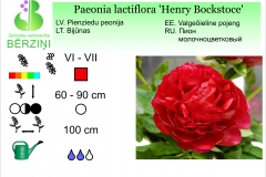 Paeonia lactiflora Henry Bockstoce