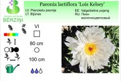 Paeonia lactiflora Lois Kelsey