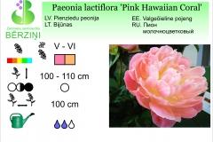 Paeonia lactiflora Pink Hawaiian Coral