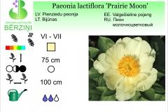 Paeonia lactiflora Prairie Moon