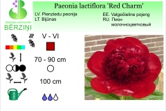 Paeonia lactiflora Red Charm