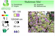 Thalictrum Elin