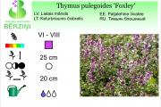 Thymus pulegoides Foxley