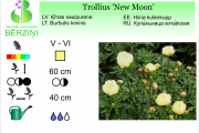Trollius New Moon
