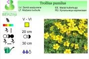 Trollius pumilus