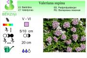 Valeriana supina