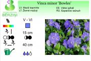 Vinca minor Bowles